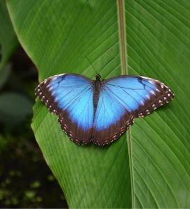 butterfly-558544_1280